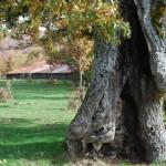 Barbadillo de Herreros Casa del Mayorazgo Sierra de la Demanda BurgosBarbadillo de Herreros Casa del Mayorazgo Sierra de la Demanda Burgos
